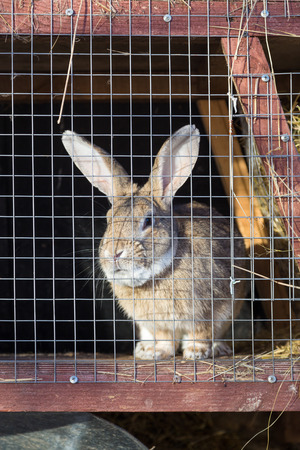 rabbit cage: Gray rabbit in cage on a sunny day