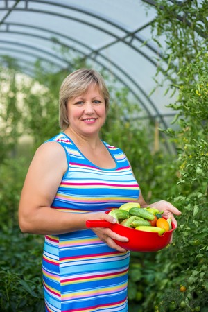 Middle-aged woman picking harvests in the greenhouse photo