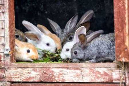 Een groep van jonge konijnen in het hok