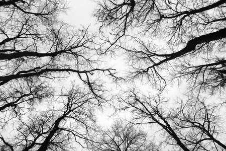 Structure of branches of trees in the winter