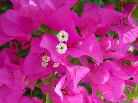 Tropical flowers of India photo
