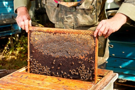 Beekeeper working with honeycomb closeup view photo