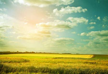 cielo azul: Campo de trigo Willage en color abstracto
