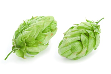 hop plant: Green hop plant isolated on white