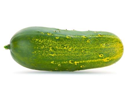 overripe: Giant cucumber overripe isolated on white background