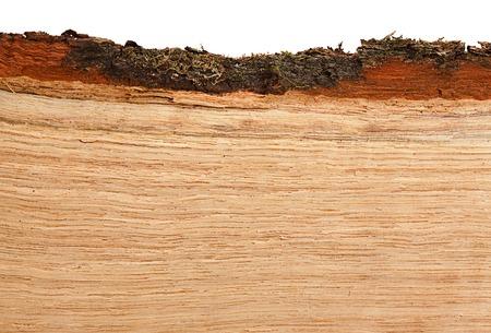 beechwood: Oak firewood piece closeup background