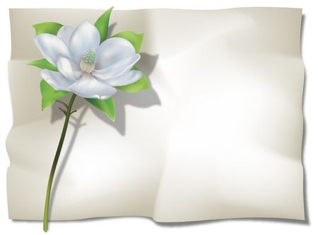 Magnolia  on old wrinkled sheet. Digital illustration. Gradient Mesh used. Two clipping paths. Stock Photo