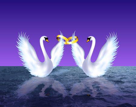 Swans in love. Digital illustration.