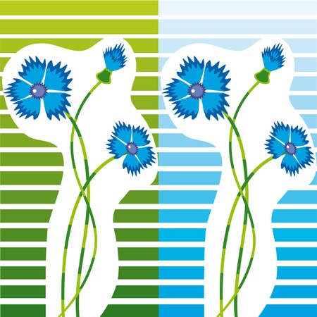 Set of two images with cornwlowers on striped background. Vector illustration. Vector