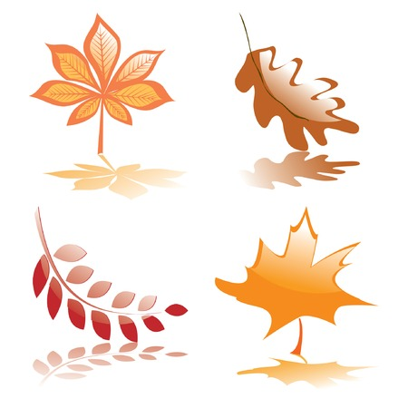 Four glossy autumnal leaves for your design. Vector illustration. Vector
