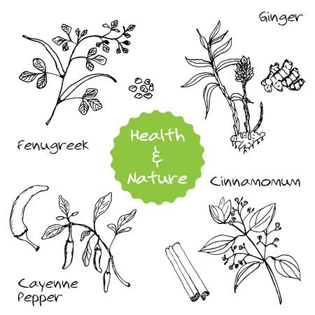 oriental medicine: Handdrawn Set - Health and Nature