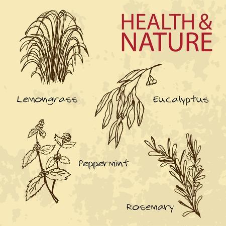 Handdrawn Illustration - Health and Nature Set Vector