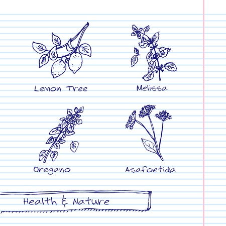 Handdrawn Illustration - Health and Nature Set Vector