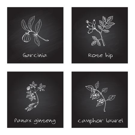 cinnamomum: Handdrawn Illustration - Health and Nature Set Illustration