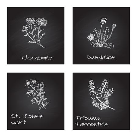 wort: Handdrawn Illustration - Health and Nature Set Illustration