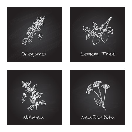origanum: Handdrawn Illustration - Health and Nature Set Illustration
