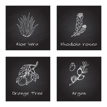 orange tree: Handdrawn Illustration - Health and Nature Set. Collection of Herbs on Black Chalkboard. Labels for Essential Oils and Natural Supplements. Aloe Vera, Rhodiola Rosea, Orange Tree, Argan Illustration