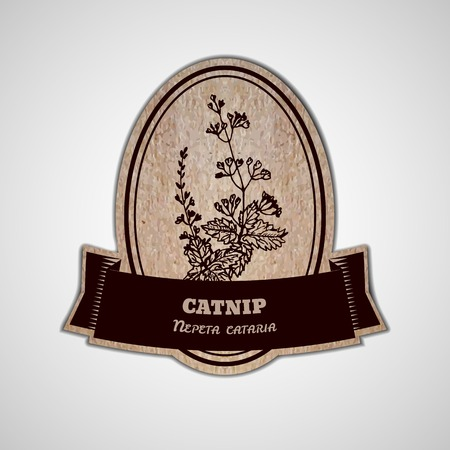 catnip: Health and Nature Collection. Badge template with a herb on cardboard background. Catnip - Nepeta cataria Illustration