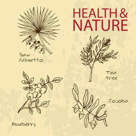Handdrawn Illustration - Health and Nature Set. Natural Supplements. Collection of Herbs. Natural Supplements. Saw Palmetto, Tea Tree, Blueberry, Jojoba Vector
