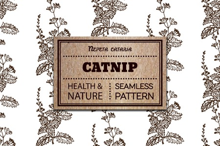 catnip: Health and Nature Collection. Seamless pattern with a herb and cardboard card. Catnip - Nepeta cataria