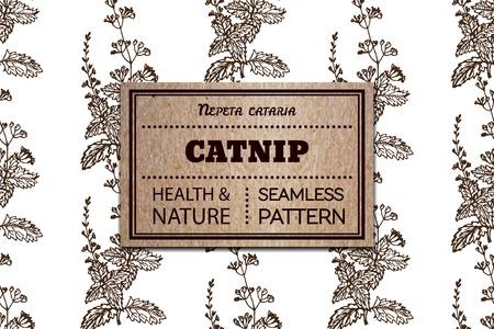 nepeta cataria: Salute e Natura Collection. Seamless pattern con una scheda di erbe e cartone. Catnip - Nepeta cataria