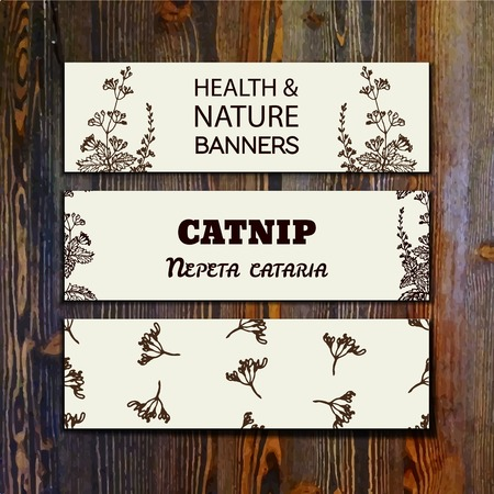 catnip: Health and Nature Collection. Collection of banners with herbal elements on wooden background. Catnip - Nepeta cataria