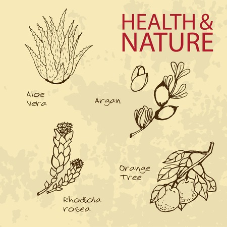 essential: Handdrawn Illustration - Health and Nature Set. Labels for Essential Oils and Natural Supplements. Aloe Vera, Rhodiola Rosea, Orange Tree, Argan