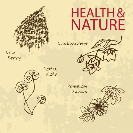 acai berry: Handdrawn Illustration - Health and Nature Set. Natural Supplements. Labels for Essential Oils and Natural Supplements. Gotu Kola, Acai Berry, Codonopsis, Passion Flower Illustration