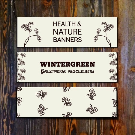 catnip: Health and Nature Collection. Collection of banners with herbal elements on wooden background. Catnip - Wintergreen - Gaultheria procumbens Illustration