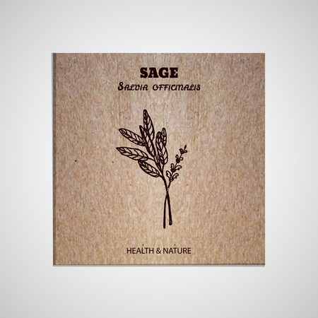 salvia: Health and Nature Collection. Banner template with a herb on cardboard background.  Sage - Salvia officinalis Illustration