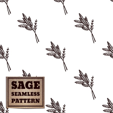 salvia: Health and Nature Collection. Seamless pattern with a herb and cardboard card.  Sage - Salvia officinalis Illustration