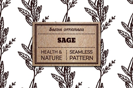officinalis: Health and Nature Collection. Seamless pattern with a herb and cardboard card.  Sage - Salvia officinalis Illustration