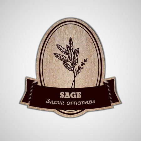 officinalis: Health and Nature Collection. Badge template with a herb on cardboard background.  Sage - Salvia officinalis