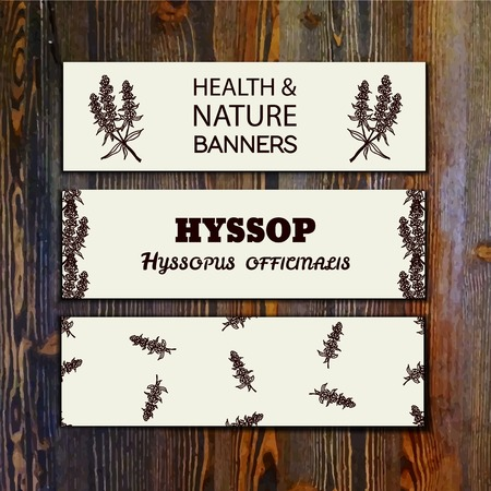 officinalis: Health and Nature Collection. Collection of banners with herbal elements on wooden background. Hyssop - Hyssopus officinalis