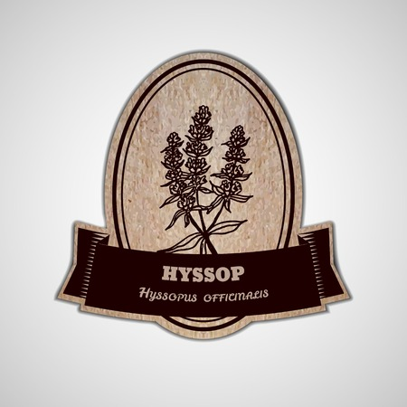officinalis: Health and Nature Collection. Badge template with a herb on cardboard background.  Hyssop - Hyssopus officinalis