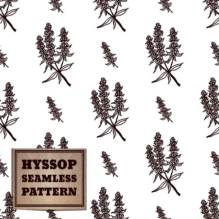 officinalis: Health and Nature Collection. Seamless pattern with a herb and cardboard card.  Hyssop - Hyssopus officinalis