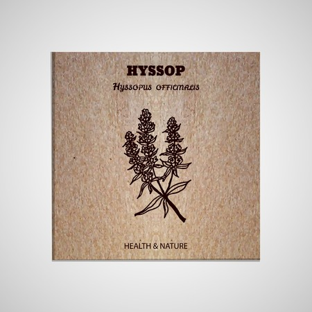 officinalis: Health and Nature Collection. Banner template with a herb on cardboard background. Hyssop - Hyssopus officinalis