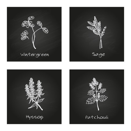 insect repellent: Handdrawn Illustration - Health and Nature Set. Collection of Herbs on Black Chalkboard. Natural Supplements. Wintergreen, Sage, Hyssop, Patchouli Illustration