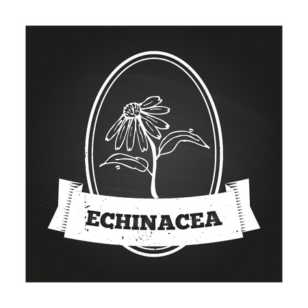 expectorant: Health and Nature Collection. Badge template with a herb on chalkboard background. Echinacea