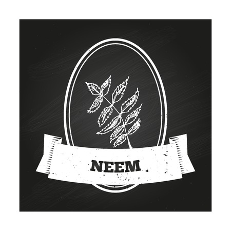 neem: Health and Nature Collection. Badge template with a herb on chalkboard background.  Neem Illustration