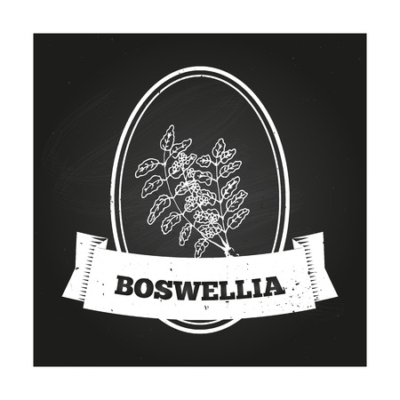Health and Nature Collection. Badge template with a herb on chalkboard background.  Boswellia Vector