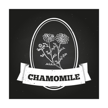 chamomilla: Chamomile Badge template with a herb on chalkboard background
