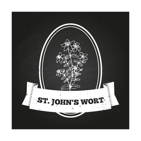 wort: St Johns wort Badge template with a herb on chalkboard background