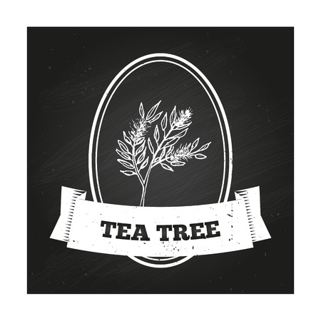 tea leaf: Health and Nature Collection. Badge template with a herb on chalkboard background. Tea tree Illustration