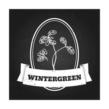 salicylate: Health and Nature Collection. Badge template with a herb on chalkboard background. WIntergreen