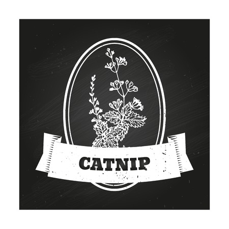 catnip: Health and Nature Collection. Badge template with a herb on chalkboard background. Catnip Illustration