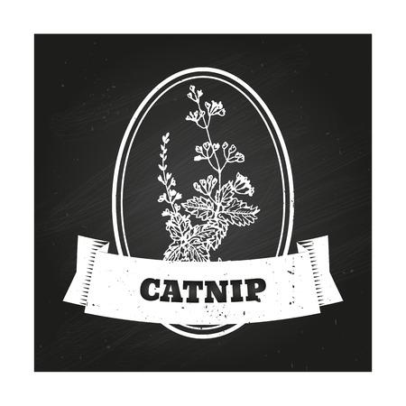nepeta cataria: Salute e Natura Collection. Modello Badge con un'erba su sfondo lavagna. Catnip