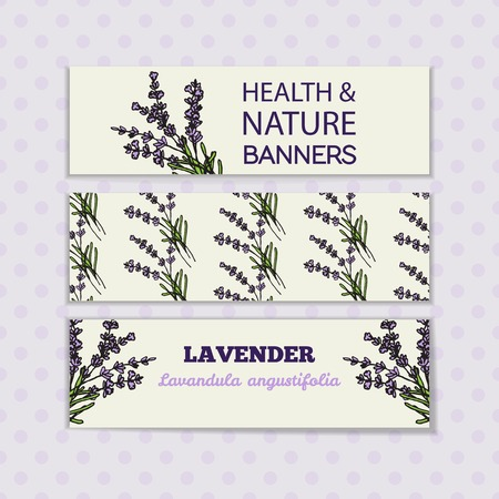 Health and Nature Collection. Banner templates with a herb on spotted seamless background. Lavender -  Lavandula angustifolia Vector