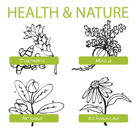 Handdrawn Set - Health and Nature. Collection of Medicine Herbs. Natural Supplements. Turmeric, Maca, Arjuna, Echinacea Vector