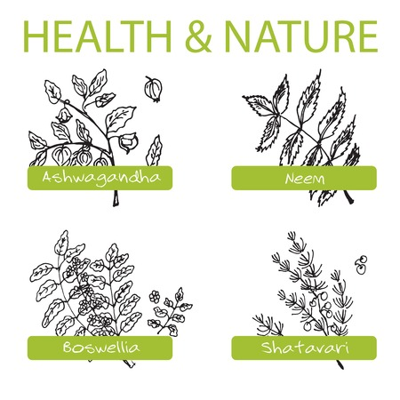 Handdrawn Set - Health and Nature. Collection of Medicine Herbs. Natural Supplements. Neem, Boswellia, Shatavari, Ashwagandha Vector